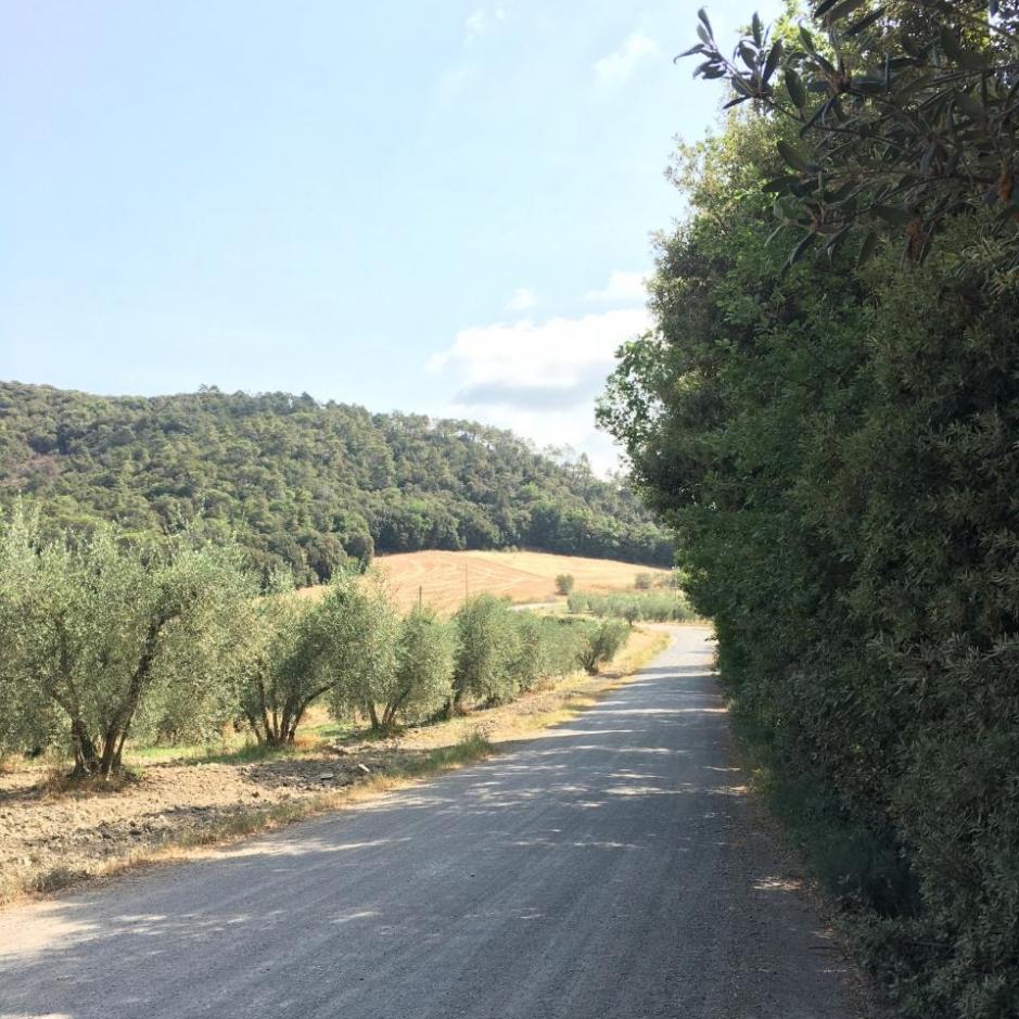 percorso_san_giminiano_volterra_-_2_parte_5_20170726_1244561159