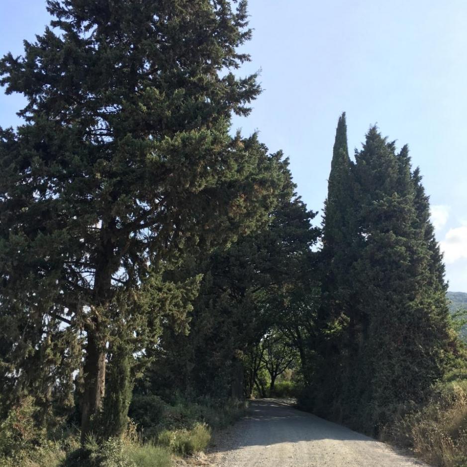 percorso_san_giminiano_volterra_-_2_parte_3_20170726_1251115619